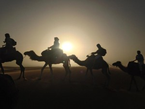 20140312-Global-Sustainability-Studies-Program-Camel-Riding