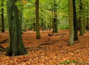 biodiversity-forest-leaves