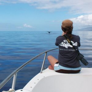 Researcher sitting at the end of a boat looking out on the ocean where a whale tail is visible.