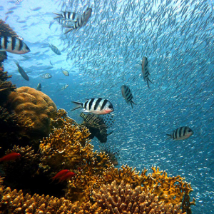 Now hiring! Sustainable fisheries postdoctoral fellow