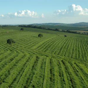 View of large agricultural fields with sky background