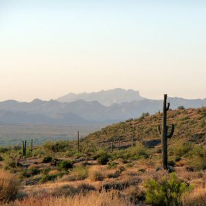 Sunset landscape view of McDowell mountains and cactus