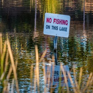 "A ""No Fishing"" sign in an urban lake"
