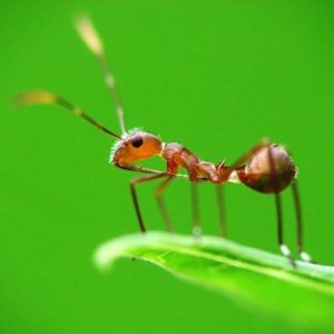 Close up of ant standing on green leaf against green background