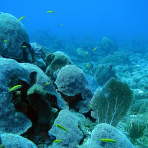 Uncovering the blue economy in coral reef fisheries