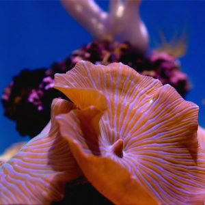 Close-up view of colorful corals in reef