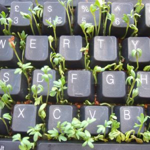 Keyboard with plant sprouts growing in between keys