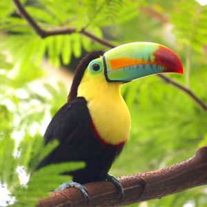 Young toucan standing on branch