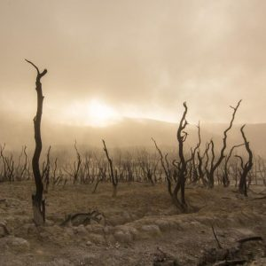 dead trees in dusty landscape
