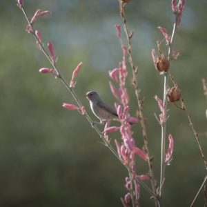Small bird sits on plant with pink flowers