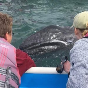 Students in boat looking up-close at whale