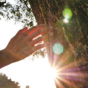 Hand touching tree with sunshine in background