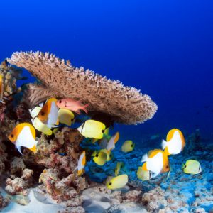 Coral reef with colorful fish swimming around