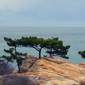 Large rock with small wide tree against coastal landscape