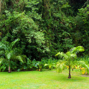 Dense tropical vegetation