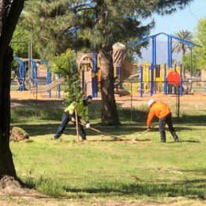 Transforming Phoenix into an 'urban forest' to combat extreme heat