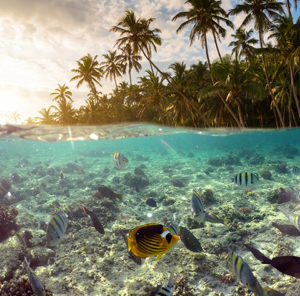 Fish swimming and palm trees against sunset
