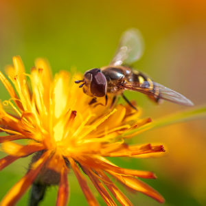 Make a difference for local plants and pollinators