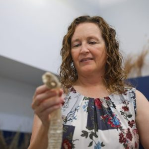 Snake removal research hopes to stop snake killings in Phoenix