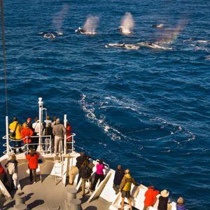 tourists-watching-fin-whales-from-a-cruise-ship-