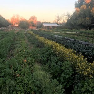 Local Hospitals Can Strengthen Our Local Food System